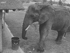 Слон подбирает мусор