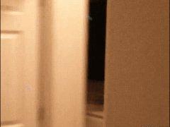 Лемур прыгает по стенам