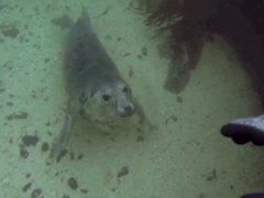 Подводное знакомство