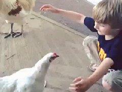 Обнимашки с курицей