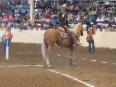 Тормозной путь у лошади