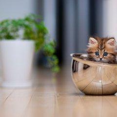 Котёнок, завоевавший Интернет